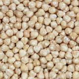 Witte Hazelnoten